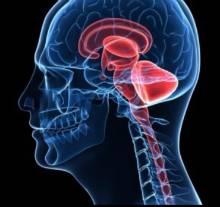 Uchastki mozga