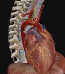 anevrizma-aorty-duga