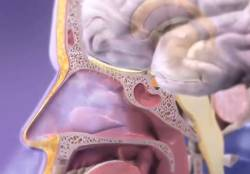 anosmiya-abanjatelni-analizator