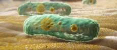 bakterii