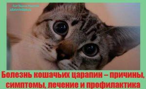 bolezn-koshachih-tsarapin