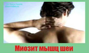 miozit-myshts-shei