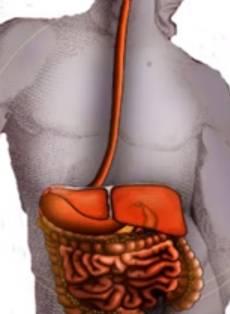 sindrom-razdrazhennogo-kishechnika-pischevaritelni-tract